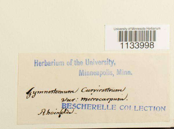 Hymenostylium recurvirostre image