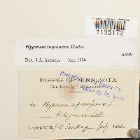 Hypnum imponens image