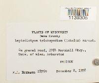 Leptodictyum humile image