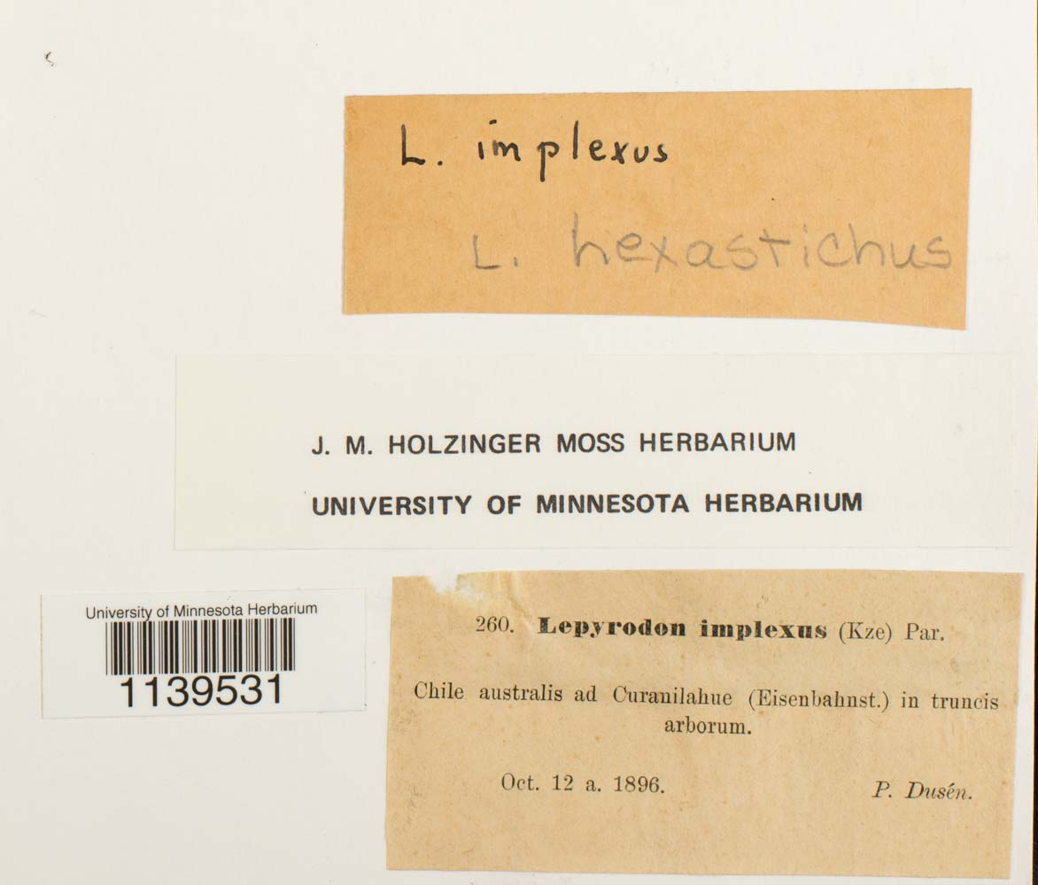 Lepyrodon hexastichus image