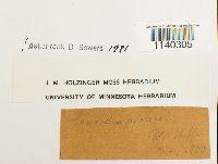 Leucodon julaceus image