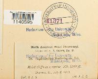 Isopterygium tenerum image
