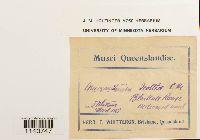 Macromitrium microstomum image
