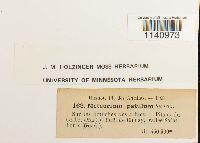 Zelometeorium patulum image