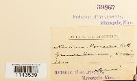 Neckeromnion lepineanum image