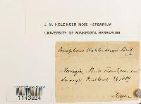 Oncophorus wahlenbergii image