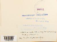 Lewinskya rupestris image