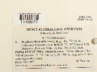 Papillaria flexicaulis image