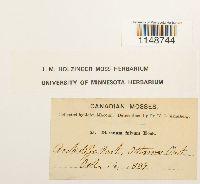 Dicranum fulvum image