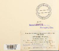 Philonotis marchica image