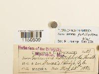 Grimmia crinitoleucophaea image