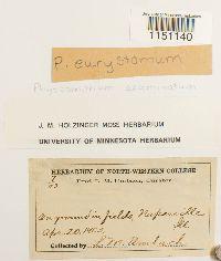 Physcomitrium eurystomum image
