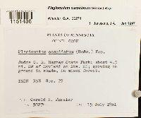 Plagiomnium cuspidatum image