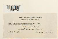 Plagiomnium drummondii image