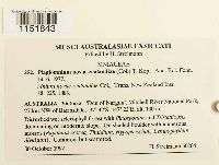 Plagiomnium novae-zealandiae image