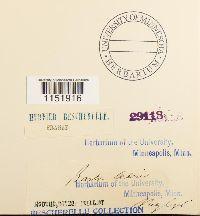 Plagiopus oederianus image