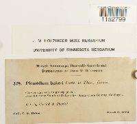 Pleuridium acuminatum image