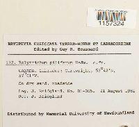 Polytrichum piliferum image