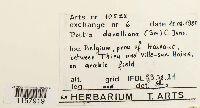Microbryum davallianum image