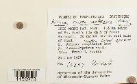 Ptilium crista-castrensis image