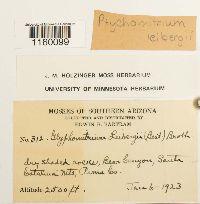 Ptychomitrium leibergii image