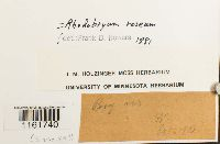 Rhodobryum roseum image