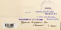 Rhytidiadelphus triquetrus image