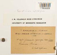 Schistidium apocarpum image