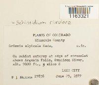 Schistidium rivulare image