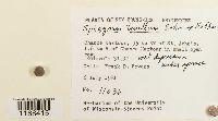 Sphagnum tenellum image