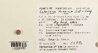 Sphagnum tenerum image