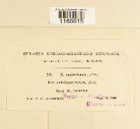 Sphagnum squarrosum image
