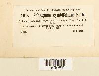 Sphagnum palustre image