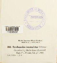 Syrrhopodon incompletus image