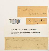 Thuidium recognitum image