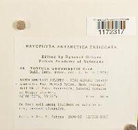 Syntrichia magellanica image