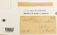 Vesicularia subdenticulata image