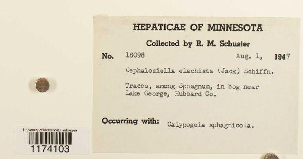 Cephaloziella image
