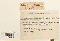 Anastrepta orcadensis image