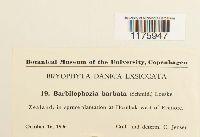 Barbilophozia barbata image