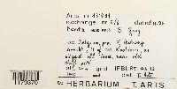 Nardia scalaris image