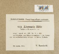 Image of Alternaria ribis