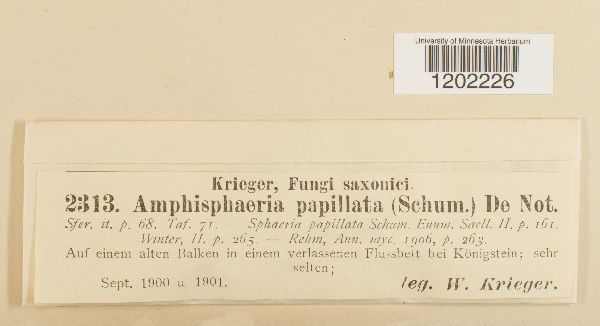 Amphisphaeria papillata image
