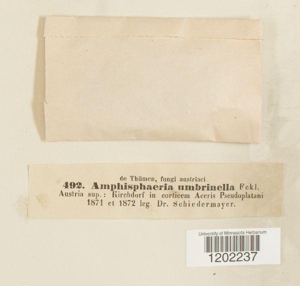 Amphisphaeria umbrinella image