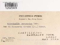 Asterinella parameriae image