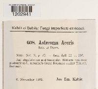 Image of Asteroma aceris