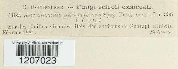 Asterostomella paraguayensis image