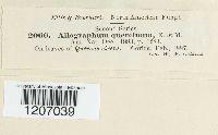 Aulographum quercinum image