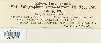 Aulographum sarmentorum image