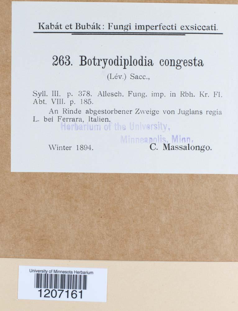Botryodiplodia congesta image